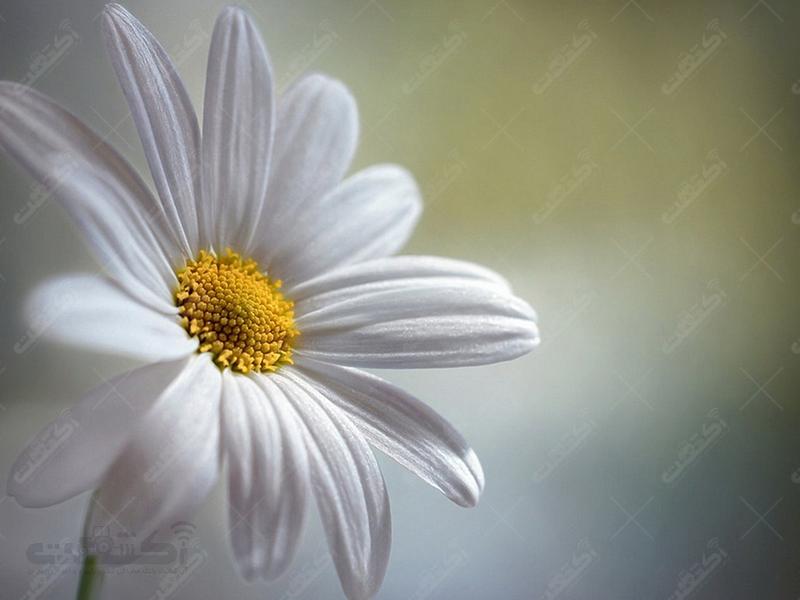 نمایشگاه بین المللی گل و گیاه کاسپین