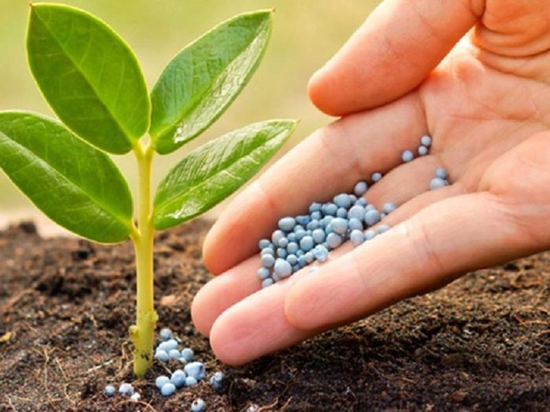 فروش عمده بذر و سم و کود های مورد نیاز کشاورزی وارد شده از خارج