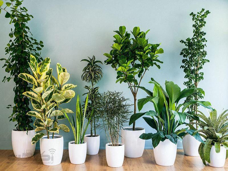 ضدعفونی کننده گیاهان آپارتمانی پراکسیدین