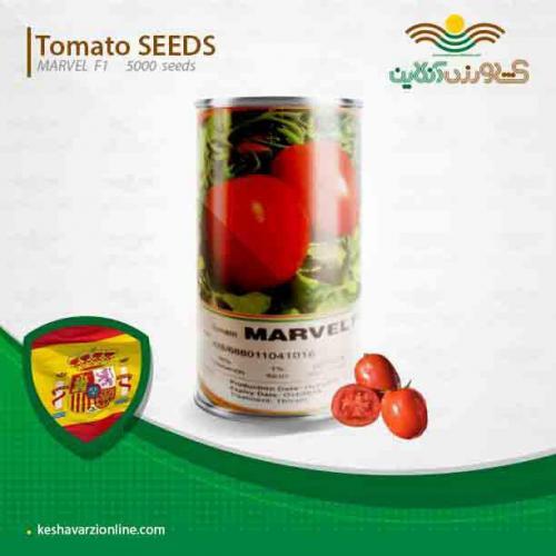 بذر گوجه مارول اسپانیا پربارترین بذر گوجه