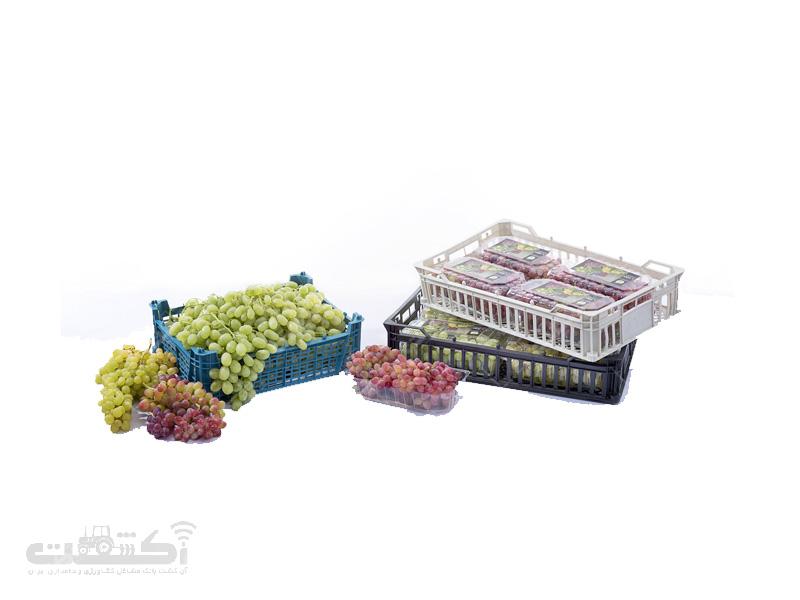 صادرات انگور