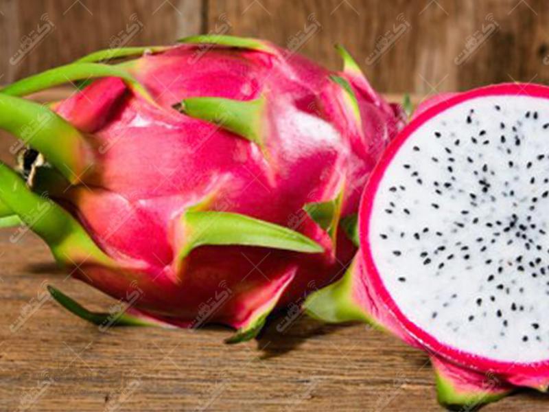 پیش فروش نشا گیاهان دارویی و نهال میوه های استوایی