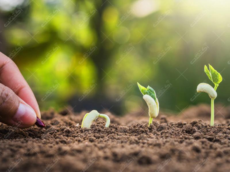 شرکت بذر آفتاب خاورمیانه واردکننده نهاده های کشاورزی