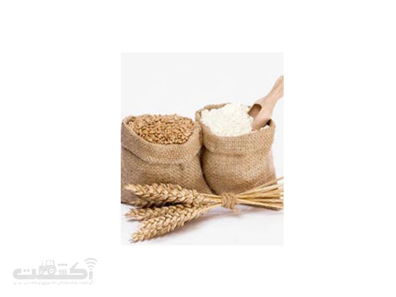برنج فجر الک شده