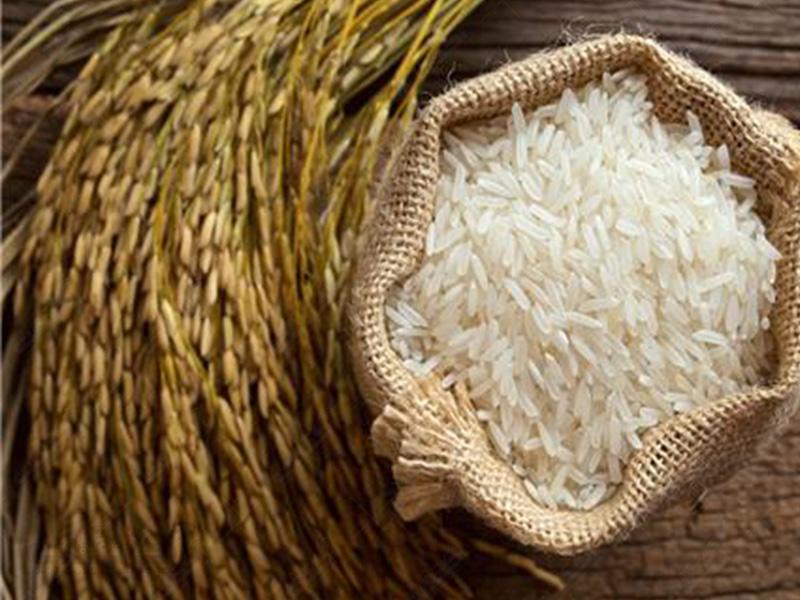 لاشه برنج شیرودی