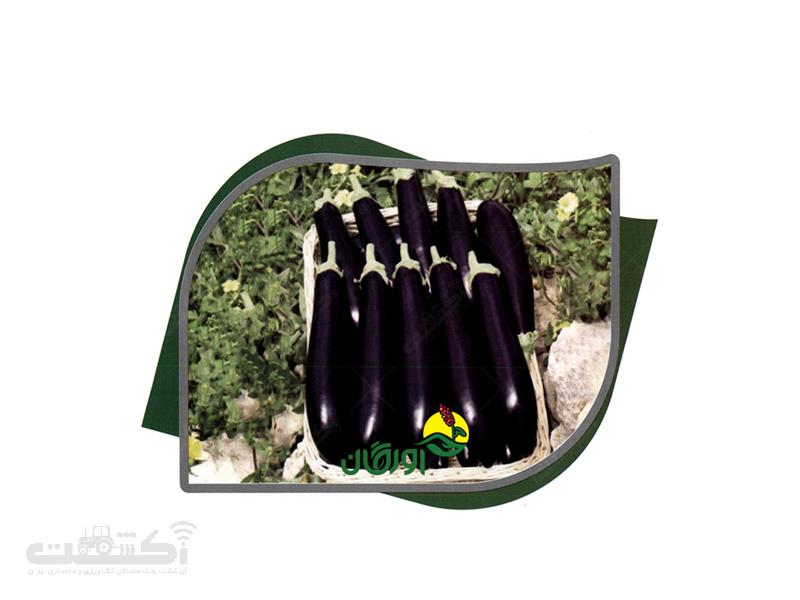 بذر بادنجان هیبرید رقم لوسینا