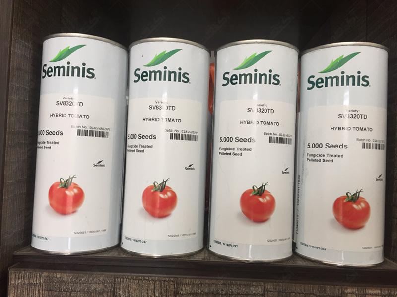فروش بذر گوجه فرنگی 8320