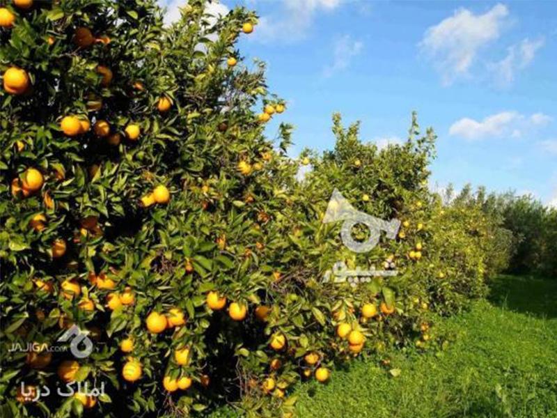 زمین کشاورزی و باغ