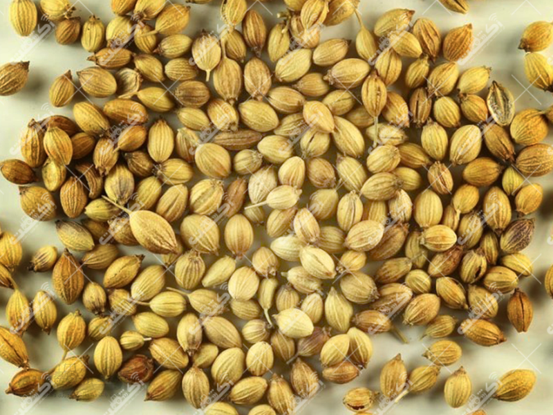 خرید و فروش بذر یونجه شبدر