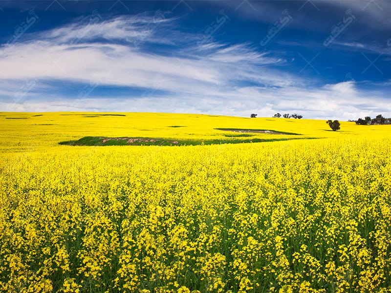 شرکت خدمات کشاورزی لاوین خاک