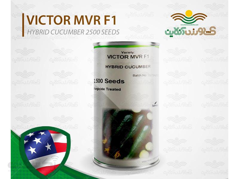 فروش بذر خیار ویکتور