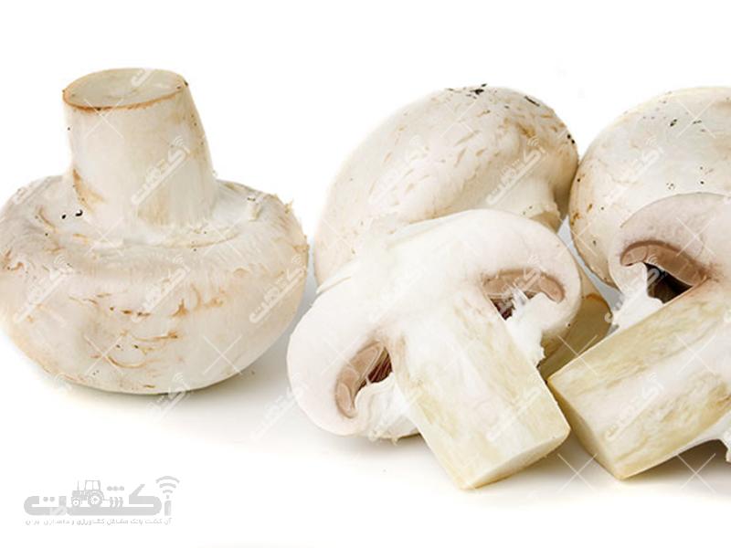 تولید و فروش قارچ خوراکی دکمه ای بصورت عمده وخرده در بسته بندیهای 200،400 و1000 گرمی