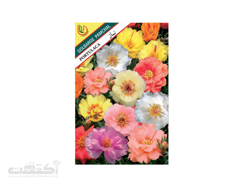 تولید و فروش بذر گل زینتی گل ناز