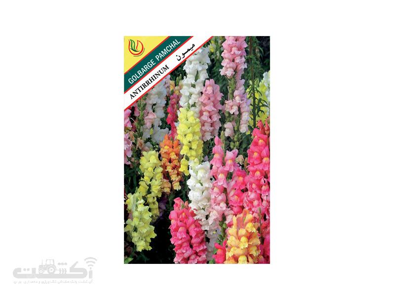 تولید و فروش بذر گل زینتی میمون