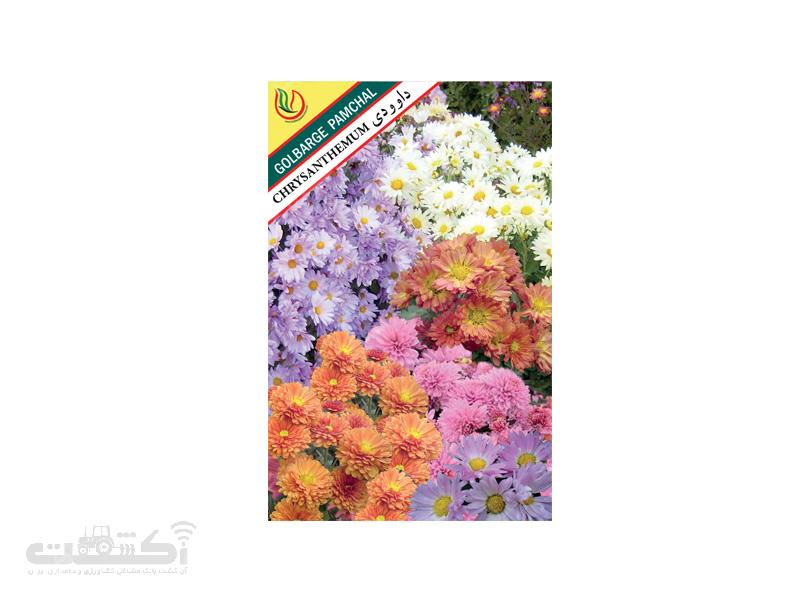 تولید و فروش بذر گل زینتی داوودی