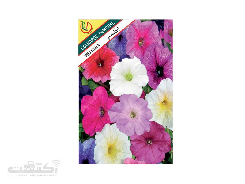 تولید و فروش بذر گل زینتی اطلسی