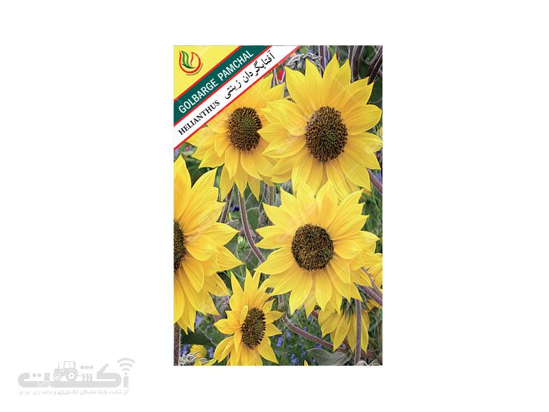 تولید و فروش بذر گل آفتابگردان زینتی