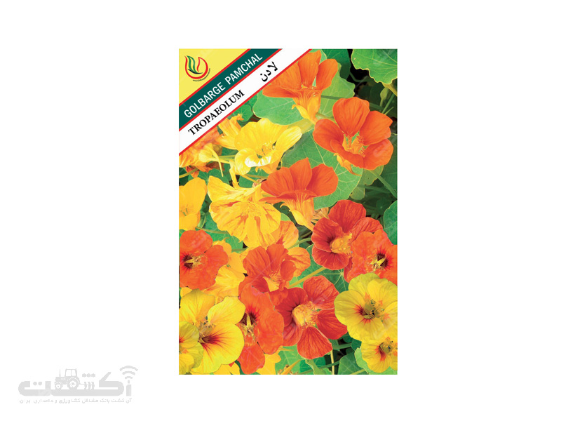 تولید و فروش بذر گل زینتی لادن