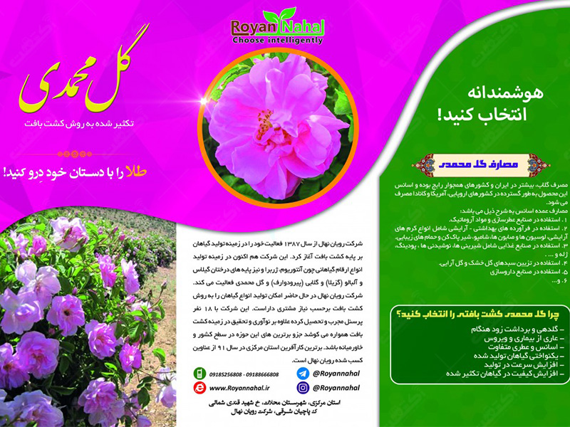 تولید گل و گیاه زینتی گل محمدی