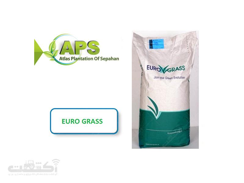 فروش بذر چمن فستوکا یوروگراس