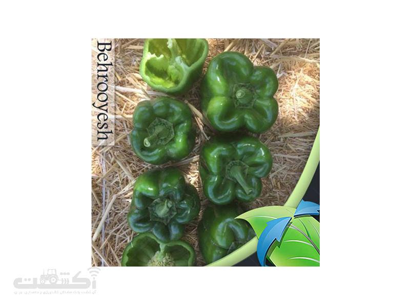 فروش بذر فلفل دلمه سبز فضای باز کروسادر