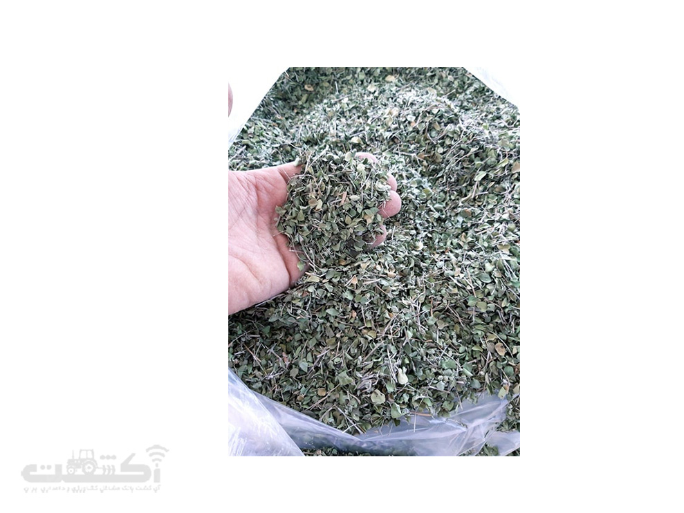 فروش گیاه دارویی آویشن شیرازی