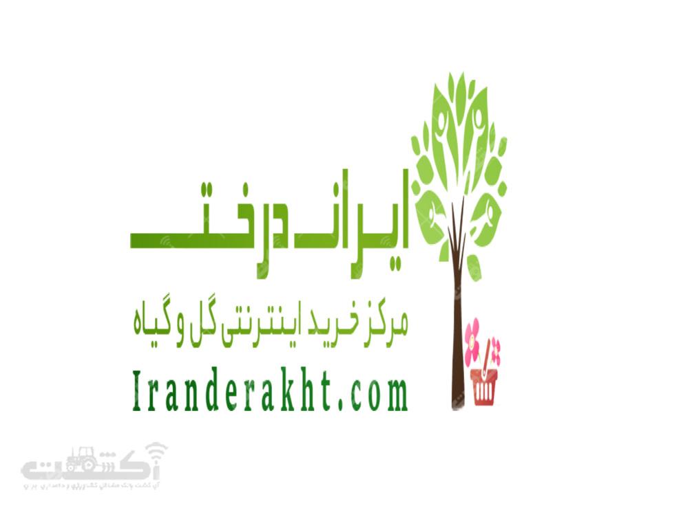فروشگاه اینترنتی گل و گیاه ایران درخت