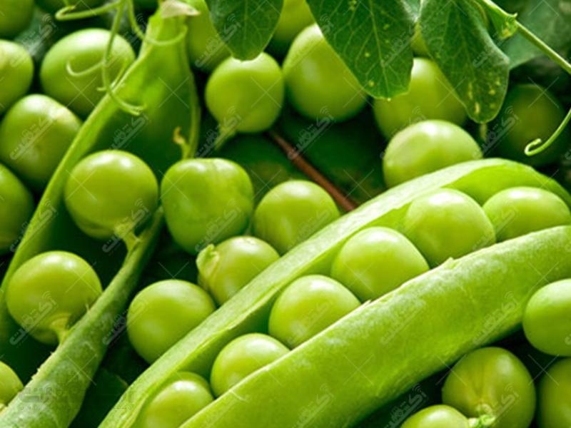 فروش محصول سالم نخود سبز