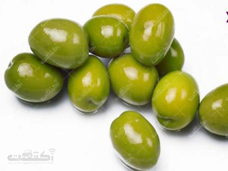 صنایع غذایی صالحی تولید کننده خیارشور و زیتون شور