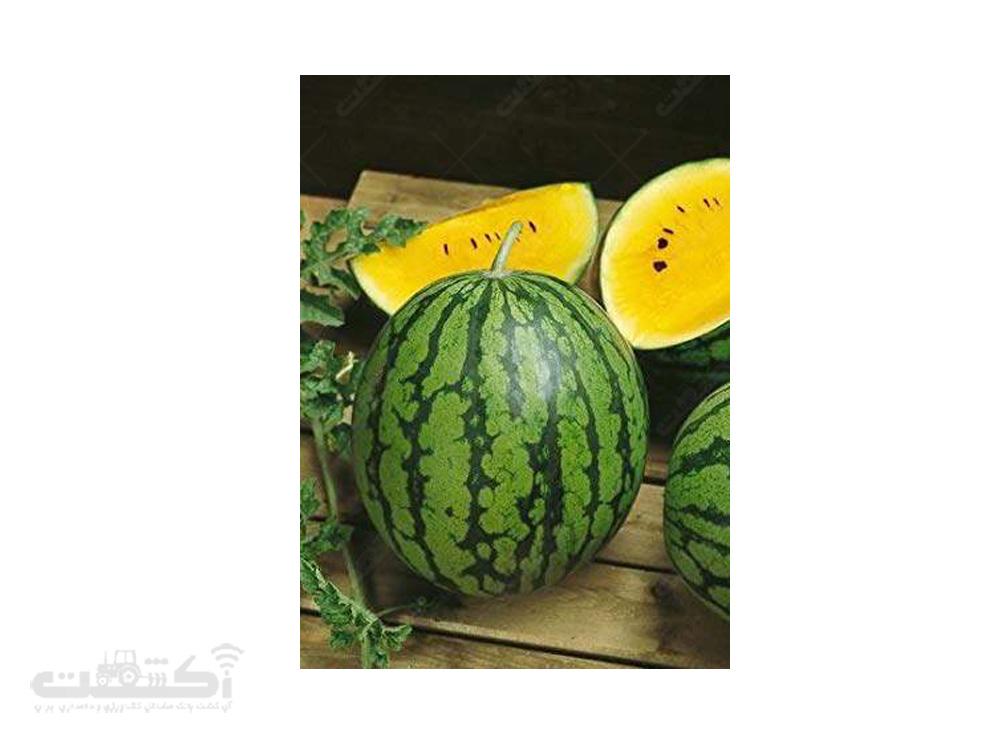 فروش بذر هندوانه زرد