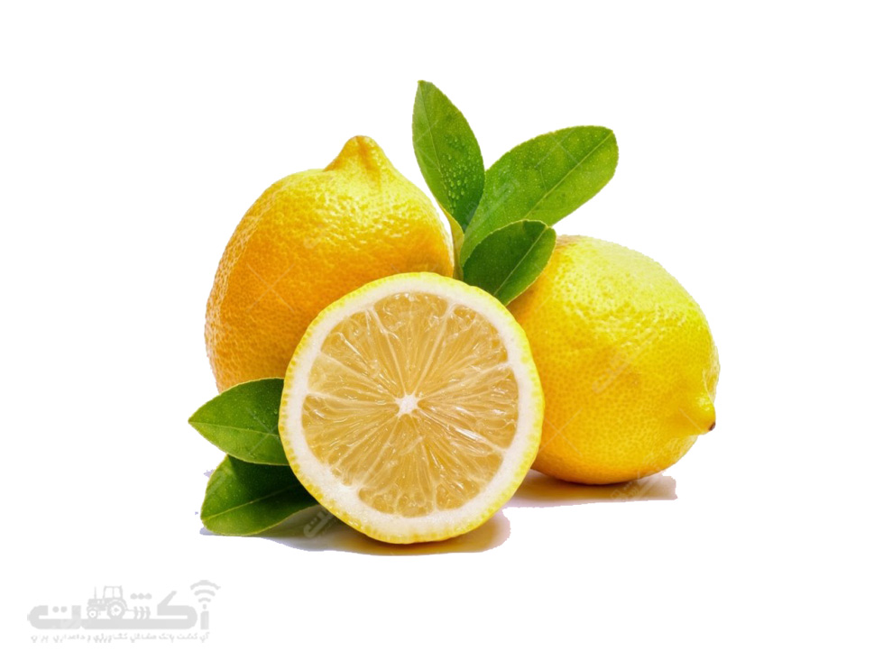 فروش نهال لیمو ترش خوشه ای