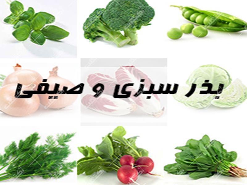 فروش انواع بذر سبزی مخصوصا بذر شاهی
