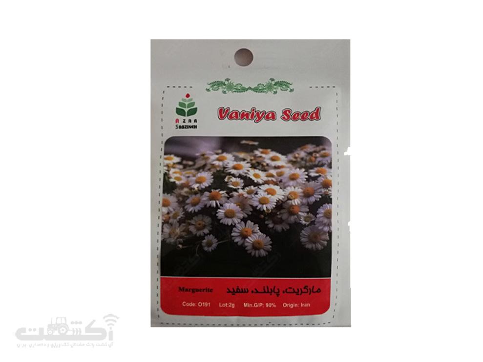 فروش بذر گل مارگریت
