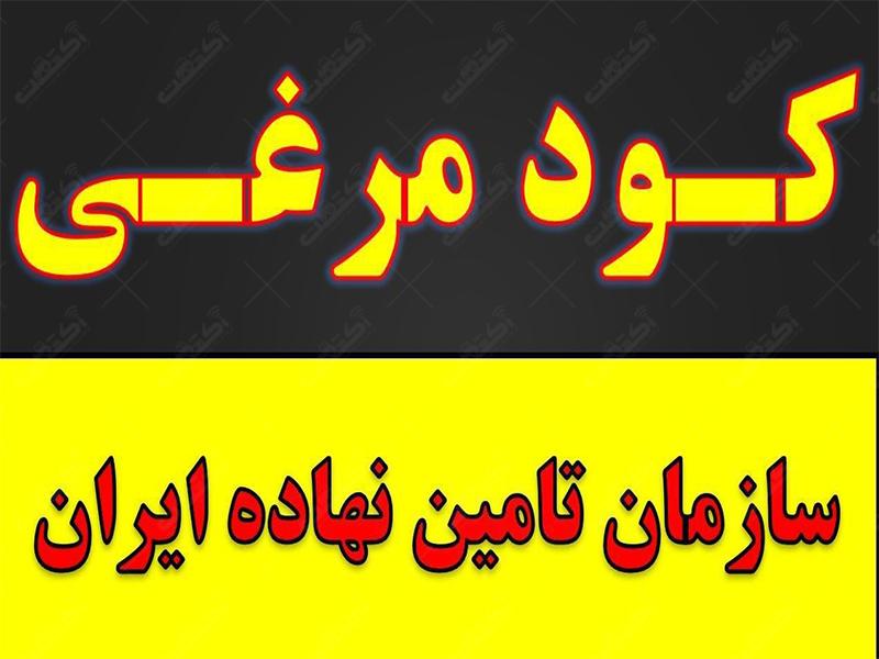 ارزان ترین و بهترین کود مرغی در ایران