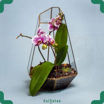 فروشگاه آنلاین گل و گیاه گُل سِتان