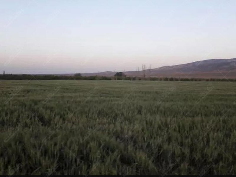 فروش 2500هکتار زمین کشاورزی با سند منگوله دار