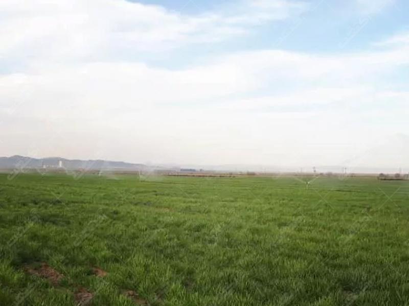 فروش زمین کشاورزی بمساحت ۱۷۶هکتار