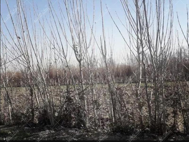 زمین کشاورزی متراژ ۱۰۷۷