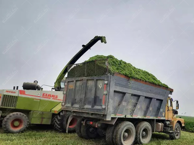 خرید فروش محصولات کشاورزی تناژ بالا