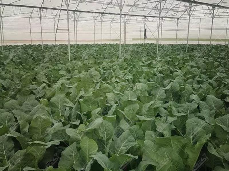 فروش گلخانه و زمین کشاورزی