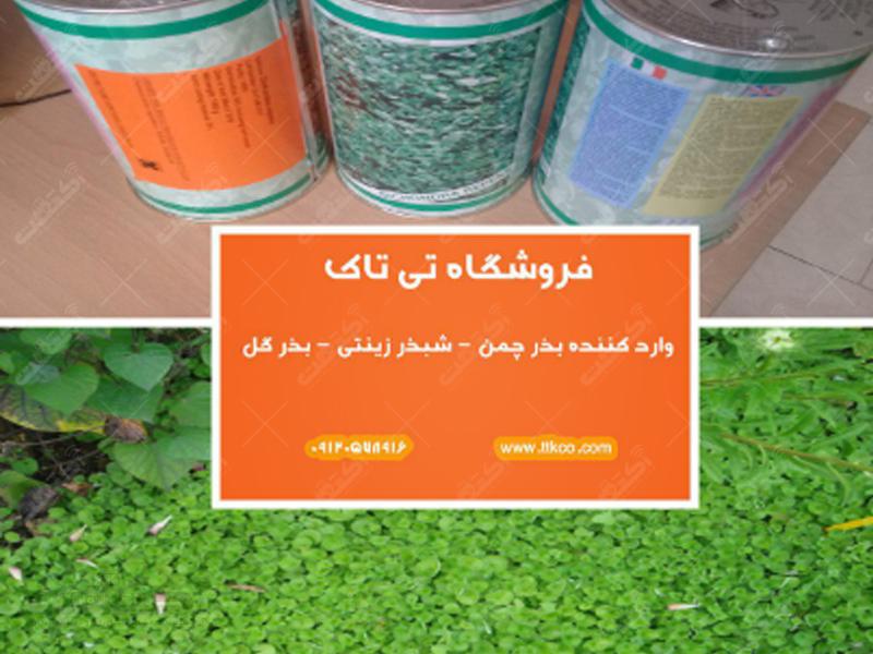 فروش شبدر زینتی بذر چمن و چمن تزئینی