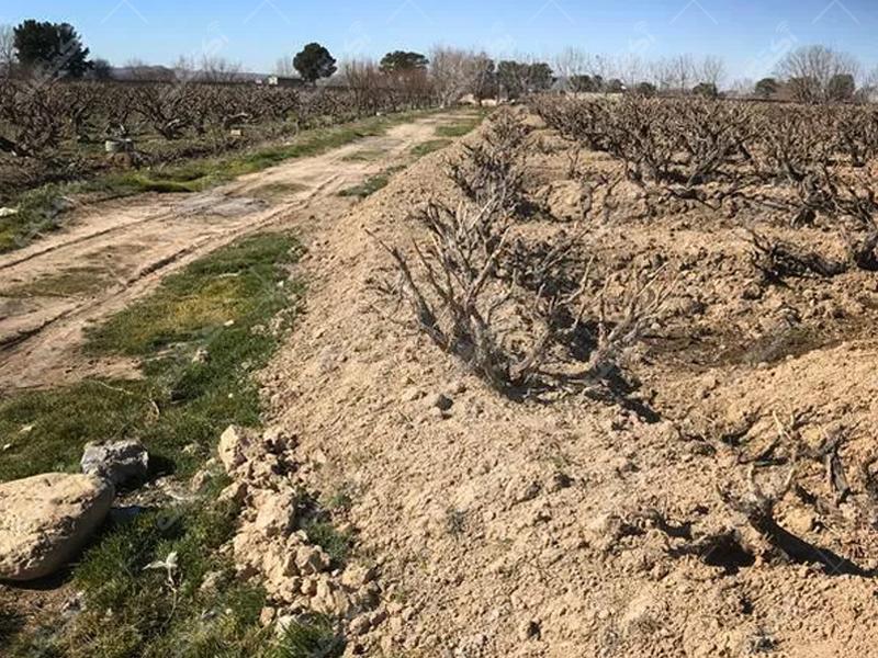 زمین کشاورزی منجیل آباد
