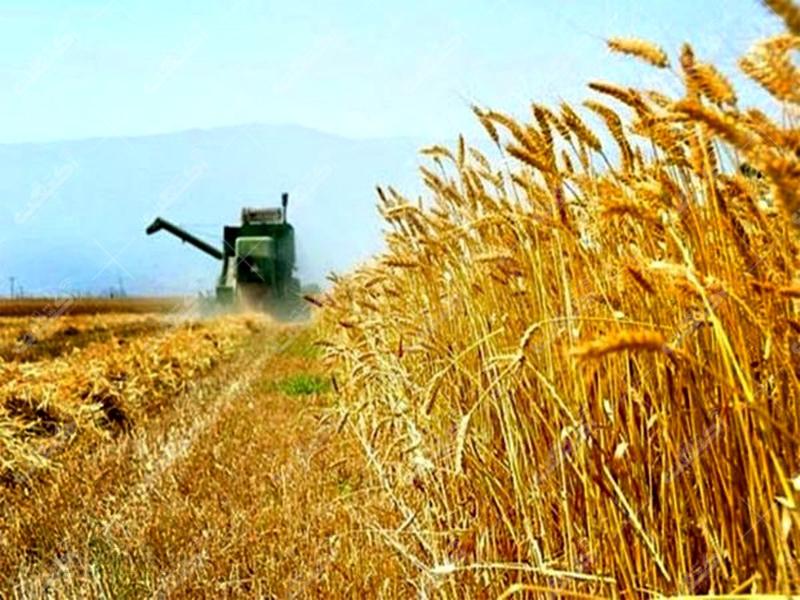 فروش انواع محصولات کشاورزی