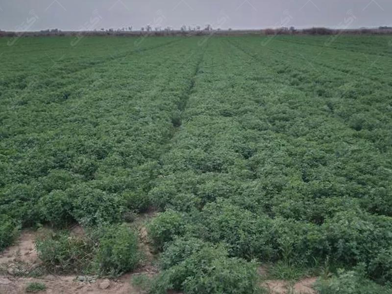 زمین مرغوب کشاورزی
