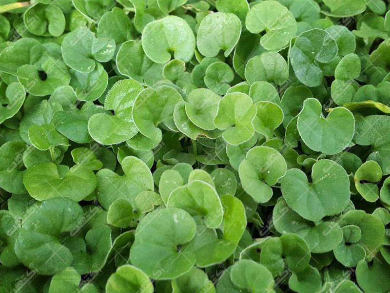 نجوای سبز