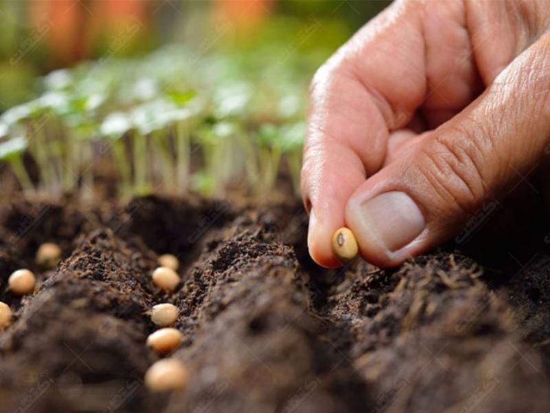 شرکت مواد زراعی اکین  واردات بذر کشاورزی