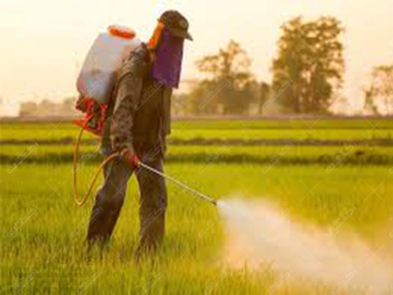 شرکت تقوی واردات بذر کشاورزی