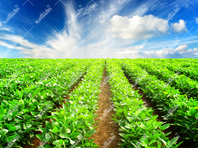فروشگاه سموم کشاورزی پردیس