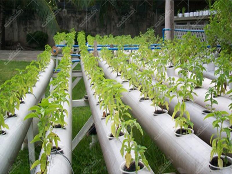 گروه کشاورزی تولیدی گلخانه آرنیوس