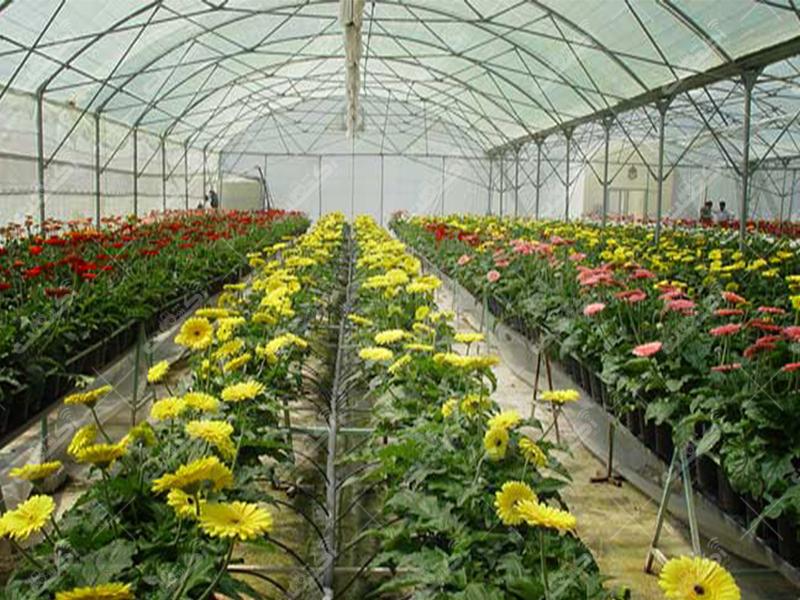 شرکت آشیانه سبز تهران